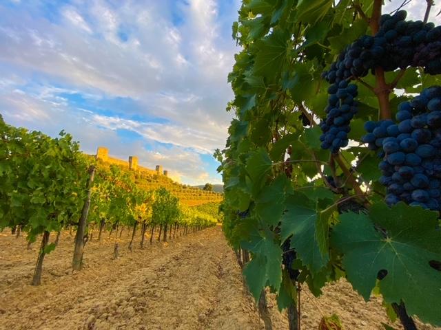 Wine Tour Monteriggioni - Wine Tasting- Fattoria Castello di Monteriggioni