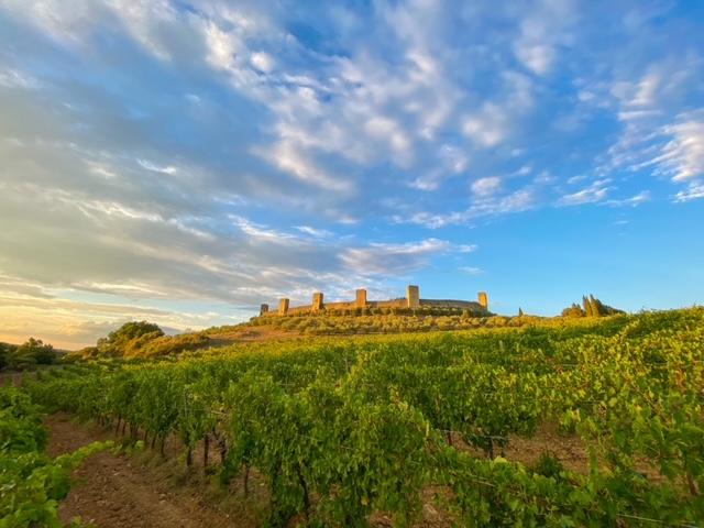 Fattoria Castello di Monteriggioni - Wine Tour - Wine Tasting