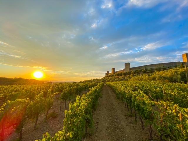 Wine Tour Monteriggioni - Fattoria Castello di Monteriggioni